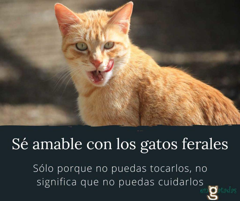 Se amable con los gatos ferales